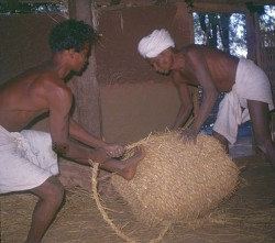 Storing rice seed